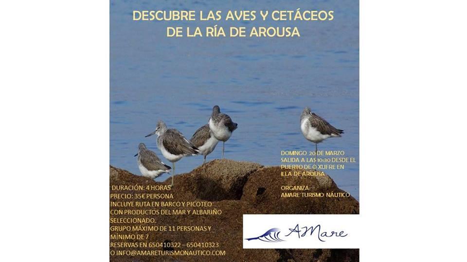 Descubre las aves y cetáceos de la ría de Arousa