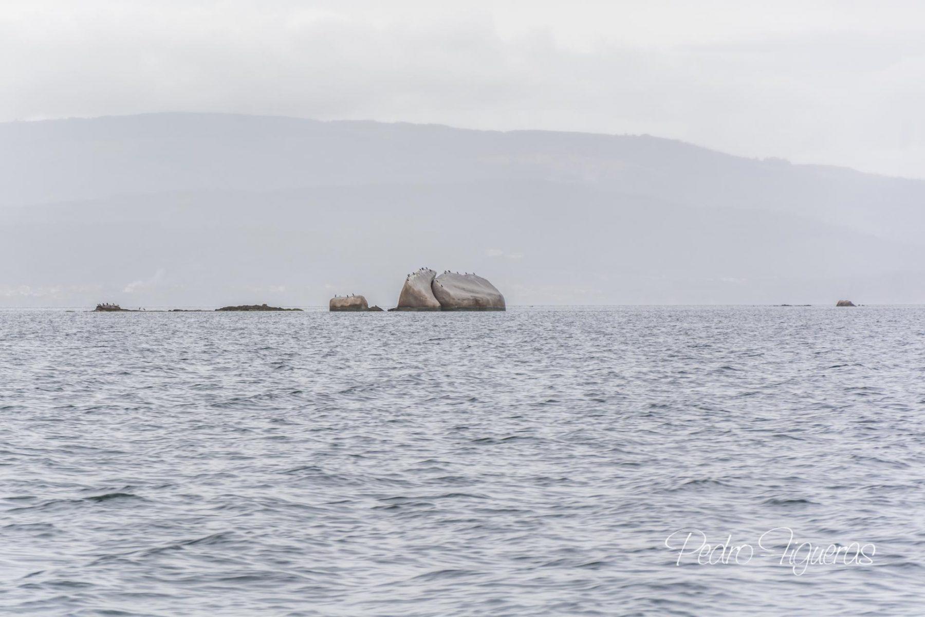 Dez imaxes definen arquipélago en Cortegada