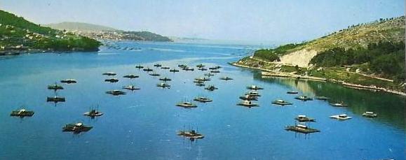 Os cambios ambientais acontecidos na Ría de Vigo durante os últimos dous séculos desvelados por microalgasfósiles
