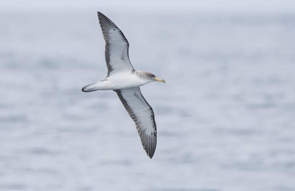 Seguemento das poboacións de aves mariñas no Parque Nacional . Resultados de 2018