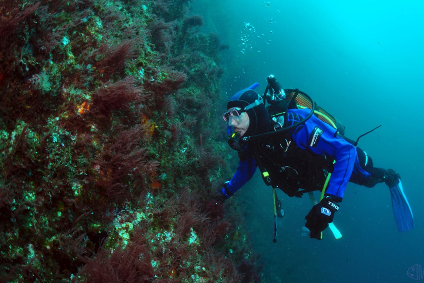 Serie documentais da costa galega por Ecoloxía Azul