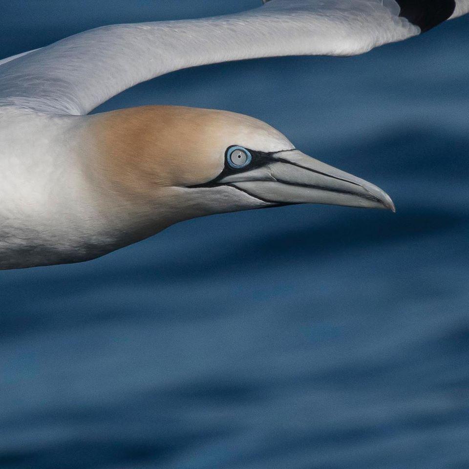 """Avistamento de aves mariñas e cetáceos. Programa de saídas no """"Chasula"""" 2020"""