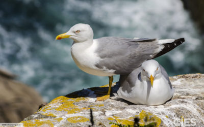 El Consejo de Ministros autoriza la inclusión del Parque Nacional Marítimo-Terrestre de las Islas Atlánticas (Galicia) en la Lista Ramsar de humedales de importancia internacional