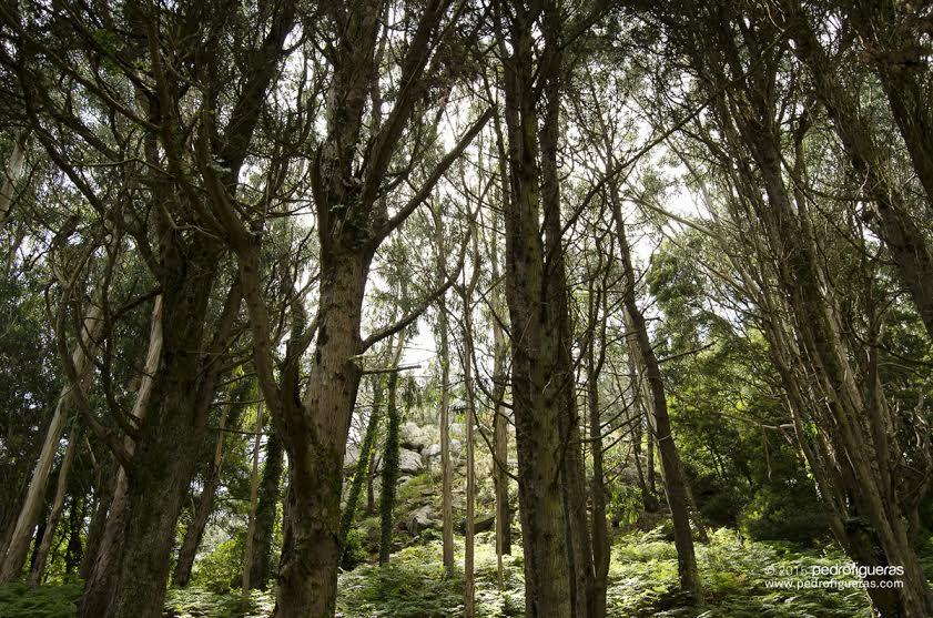 A forestación das illas Cíes modificou ecosistemas e cambiou a paisaxe (I)