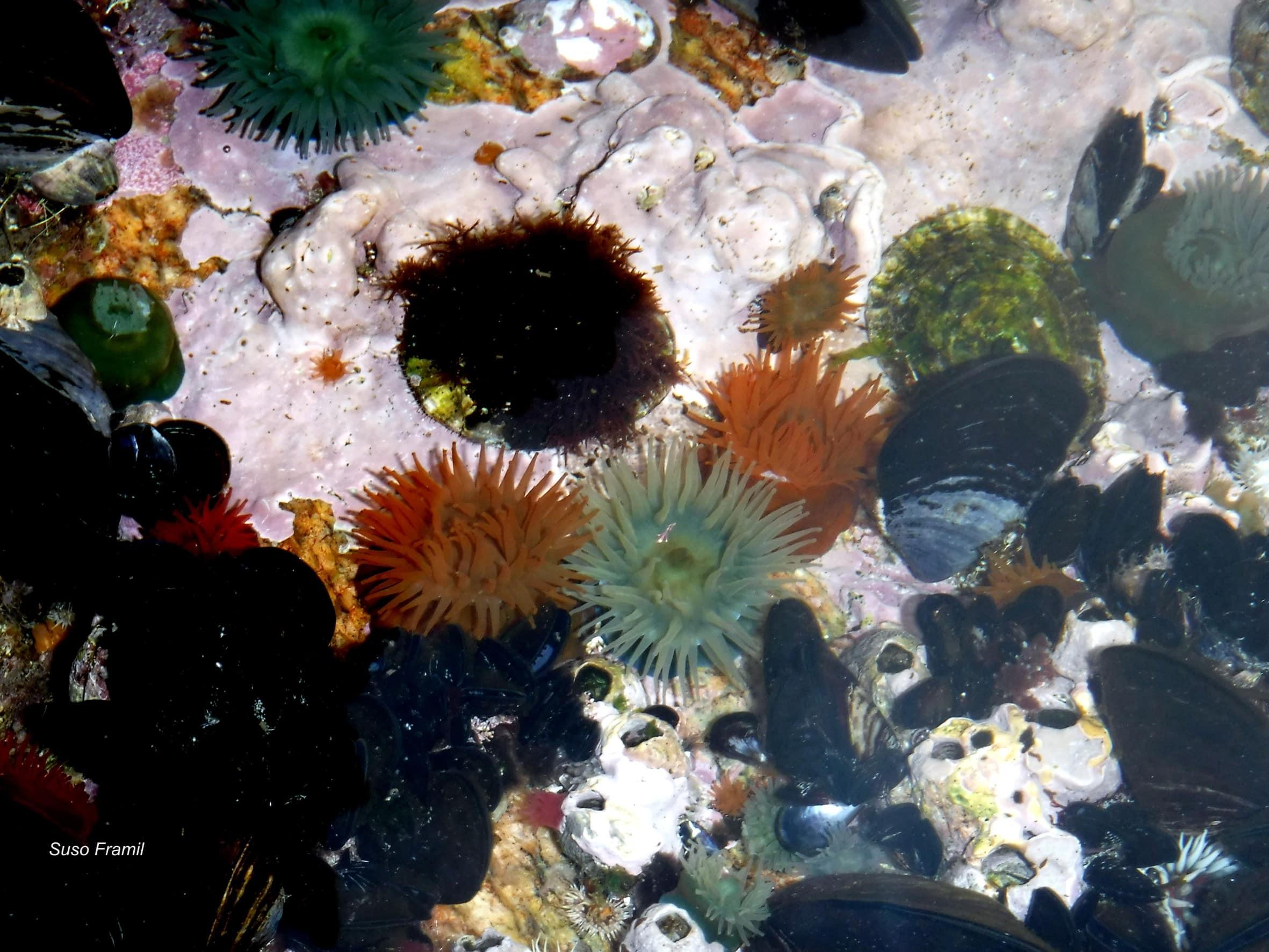O fluír da vida nas pozas de marea