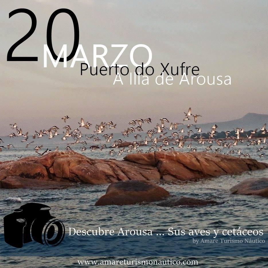 Descubre Arousa, sus aves y cetáceos