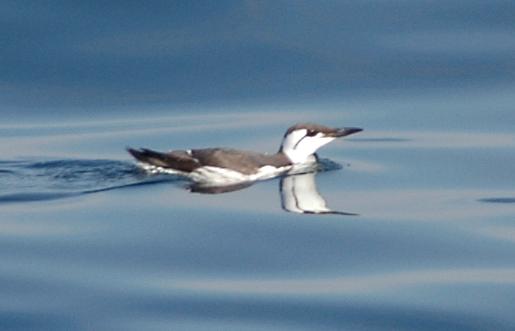 Aros (II). O Aro dos cons en Mar de Aves
