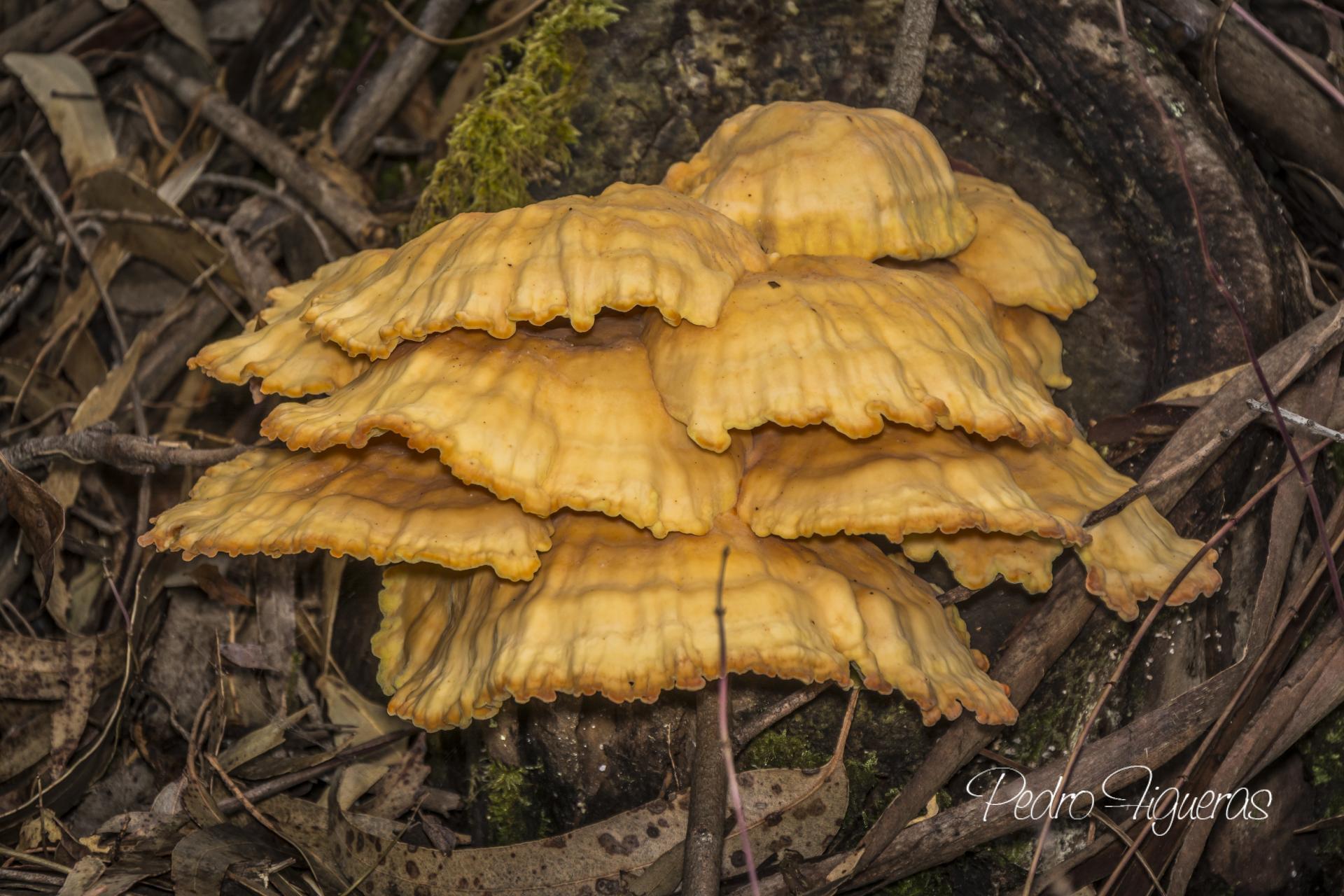 Este outono descobre as máis de 800 especies de cogomelos da illa de Cortegada