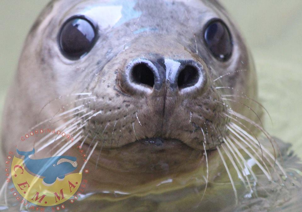 Tortugas y mamíferos marinos en Galicia