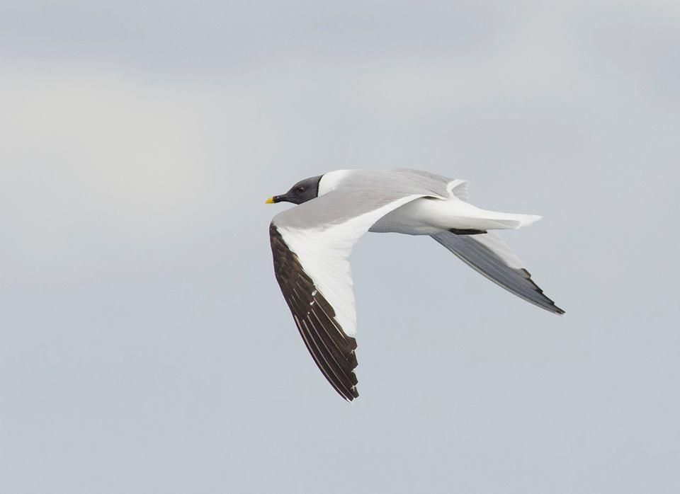 Saída para observar aves peláxicas e cetáceos no Chasula