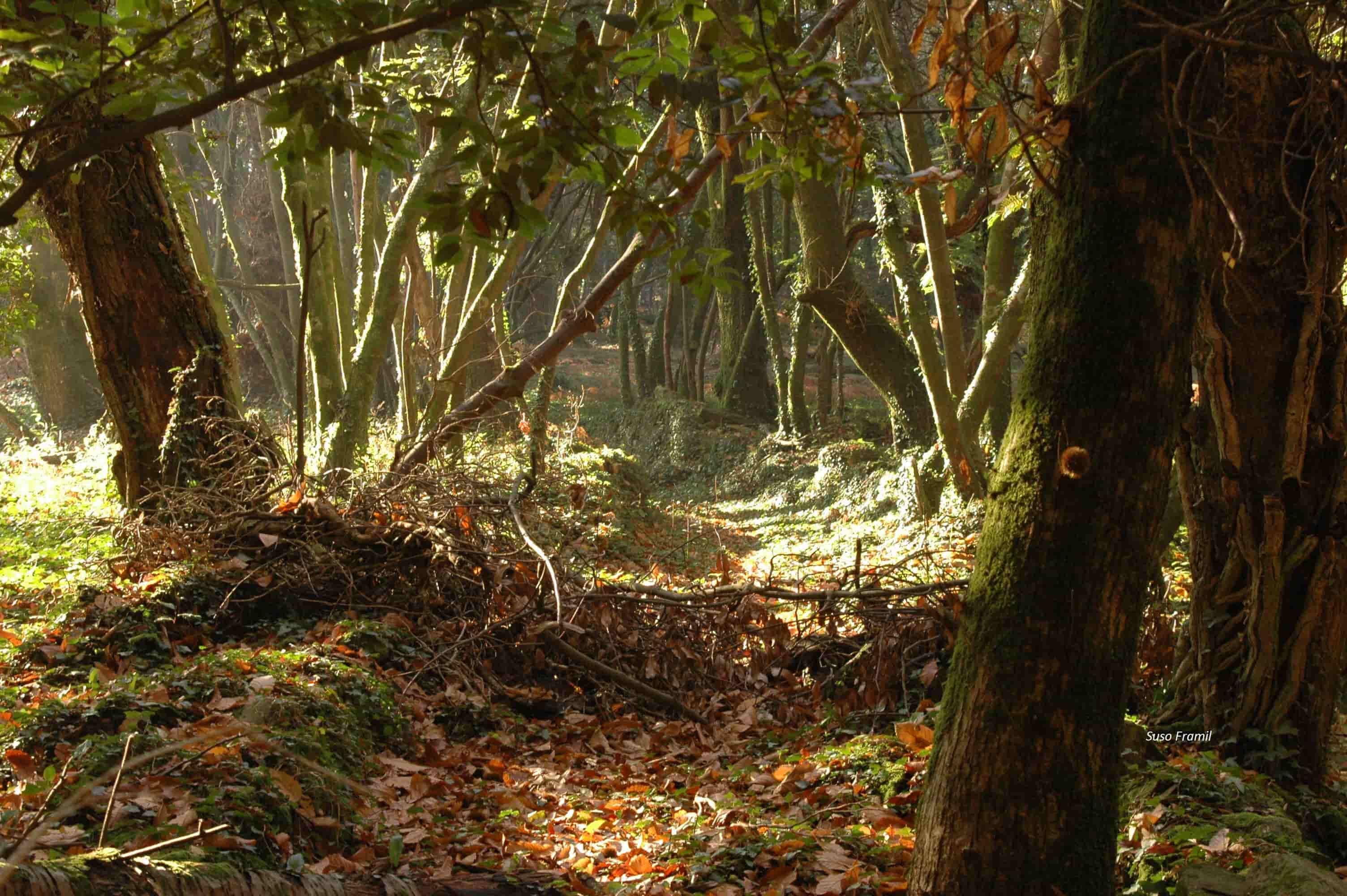 """Guía de natureza: deseño de itinerarios interpretativos"" con Teixugo S.Coop"