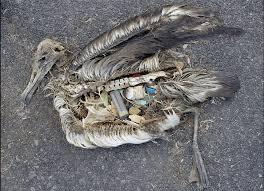 Microplásticos: os plásticos que menos se ven son os máis perigosos para o ambiente