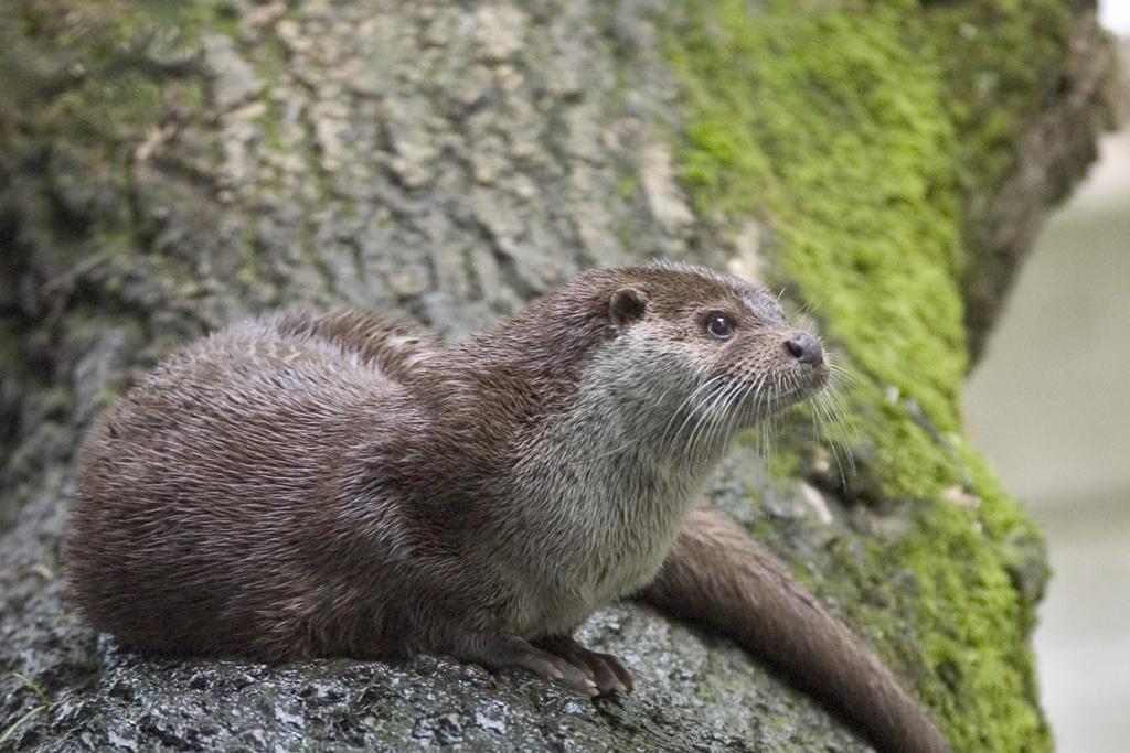 Introdución aos mamíferos terrestres do Parque Nacional