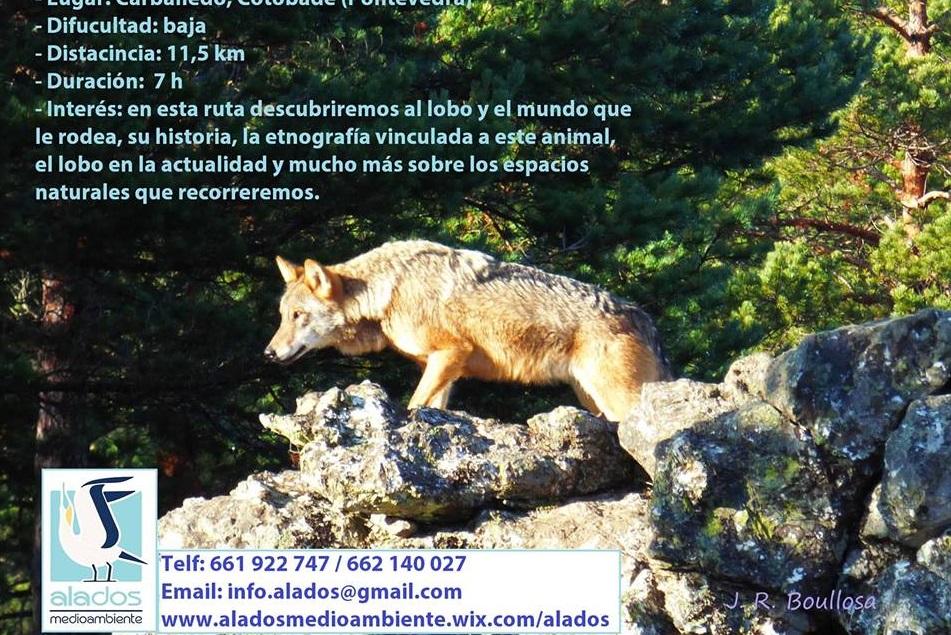 Roteiro guiado Foxo do Lobo con Alados Medioambiente
