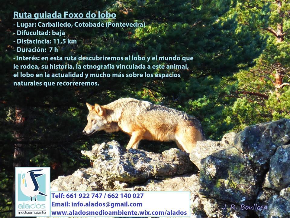 Foxo do lobo setembro
