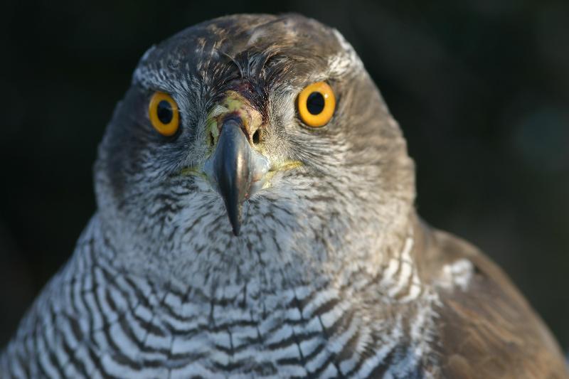 Introdución ás aves terrestres do Parque Nacional