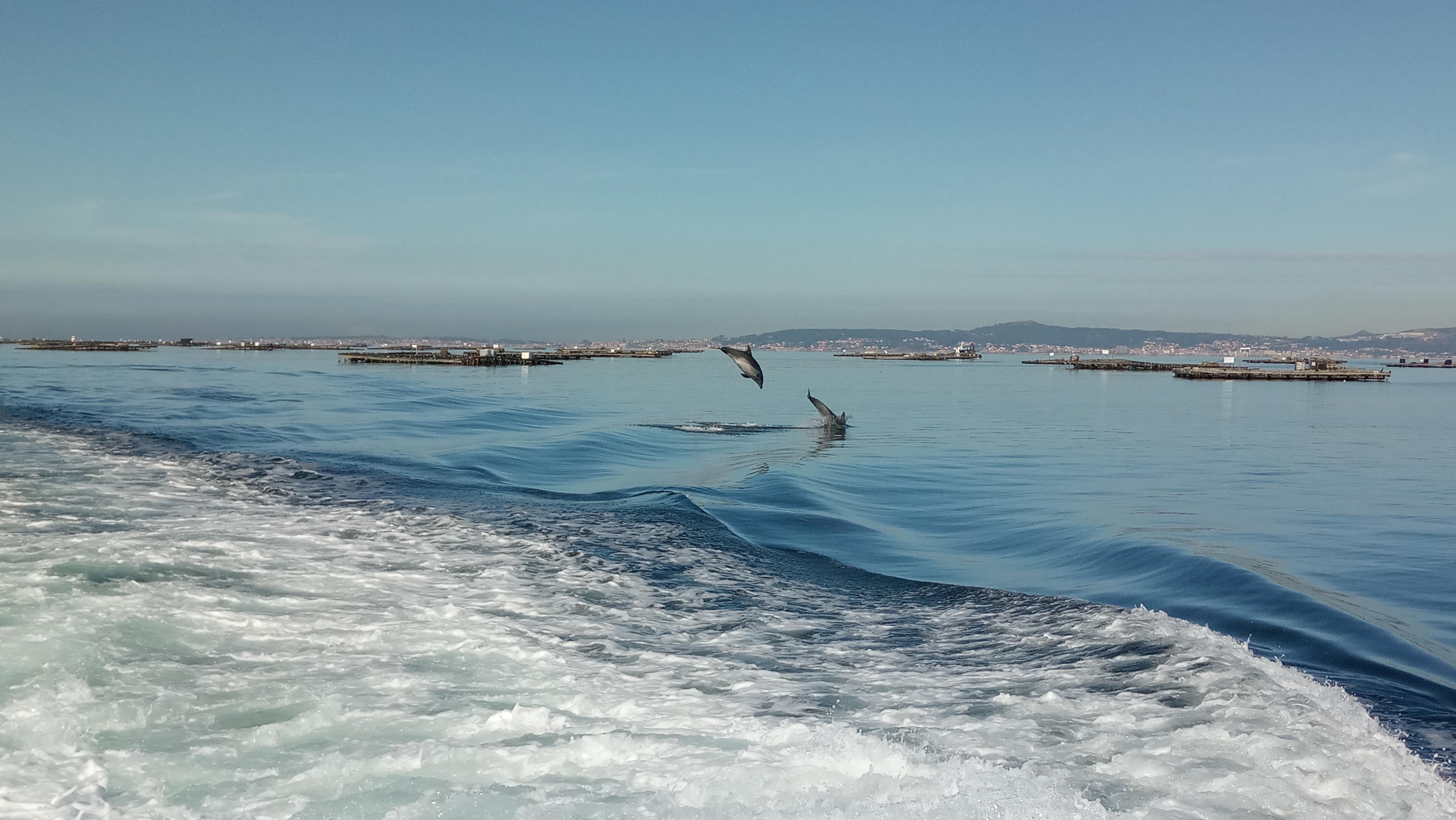 Rías Baixas, costa de cetáceos. Fotogalería
