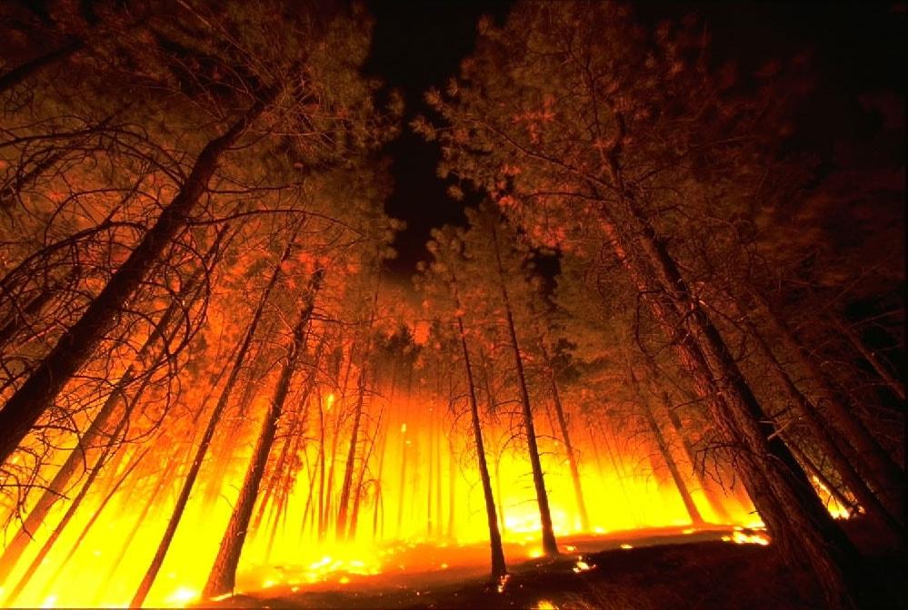 Bombeiros e policías de Vigo foron gratificados por participar na extinción dun incendio nas Illas Cíes. Ano 1963