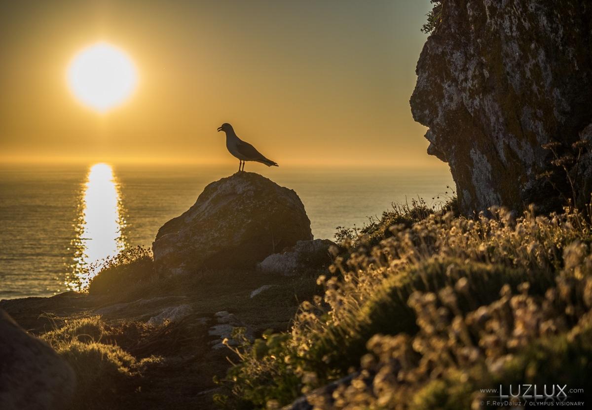 A gaivota patiamarela xa deu comezo á primavera no Parque Nacional