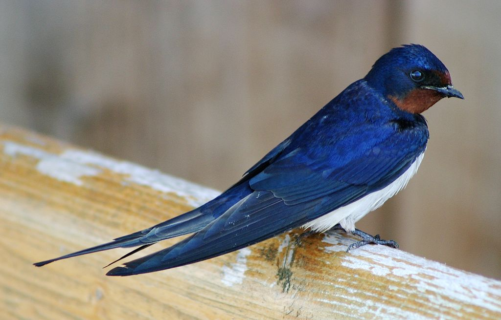 IX Congreso Galego de Ornitoloxía. Efectos dos cambios ambientais e territoriais nas aves galegas