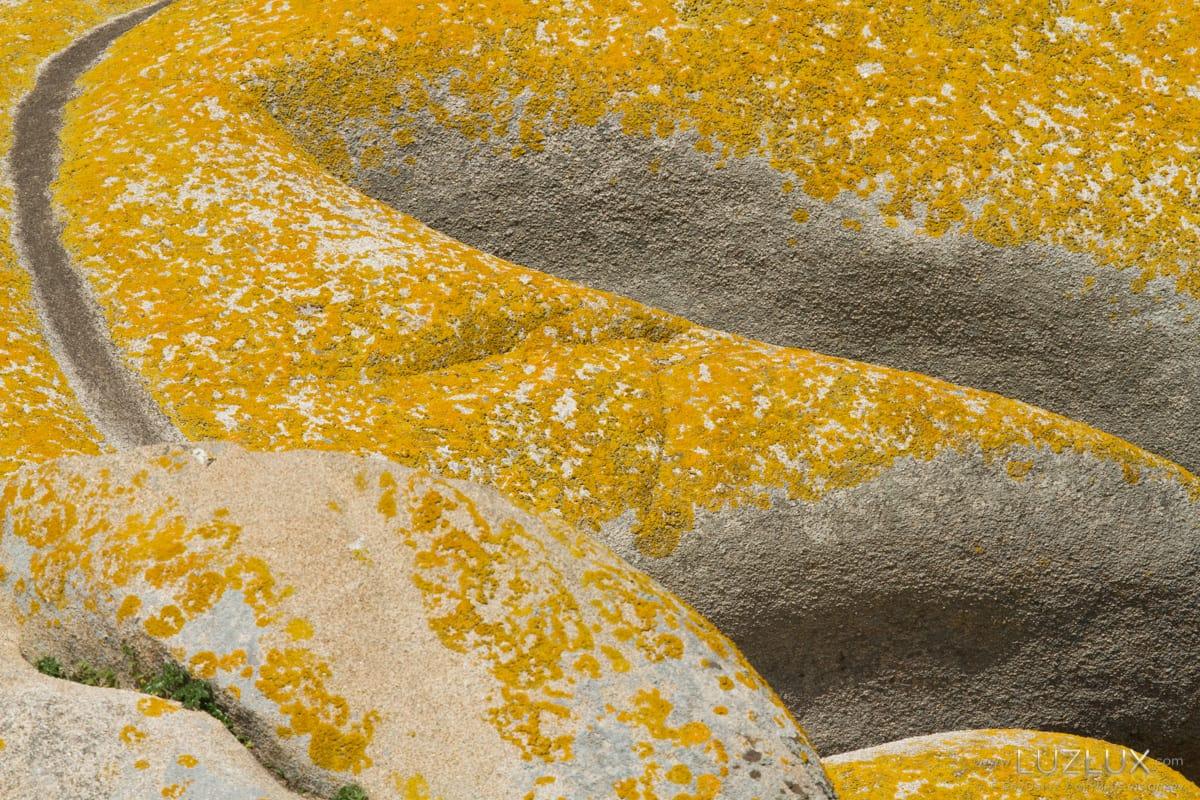 Asociación e simbiose nunha rocha granítica colonizada por liques