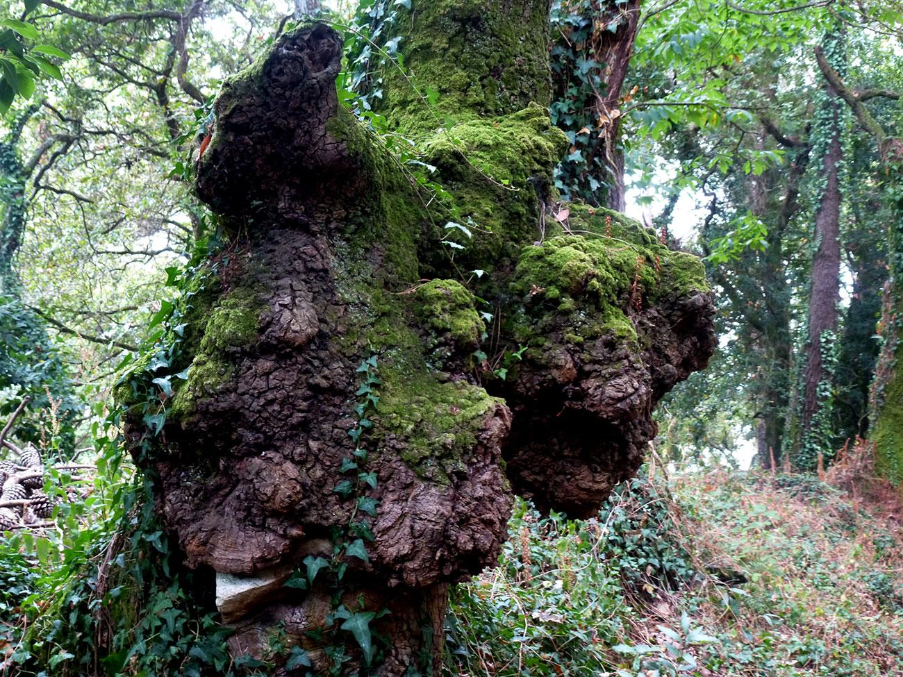 Un bosque na illa de Cortegada (I)
