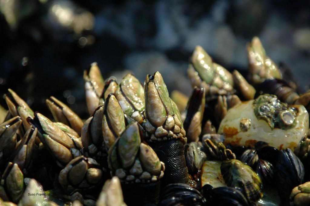 Arranca o proxecto para crear o maior e máis diverso banco de recursos biolóxicos mariños