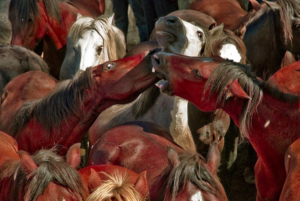 Alianza pola conservación do cabalo de monte galego
