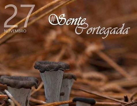 Coñecendo os cogumelos da illa de Cortegada