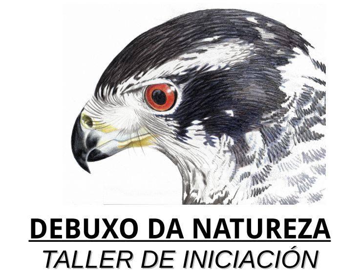 Taller iniciación dibujo en la naturaleza