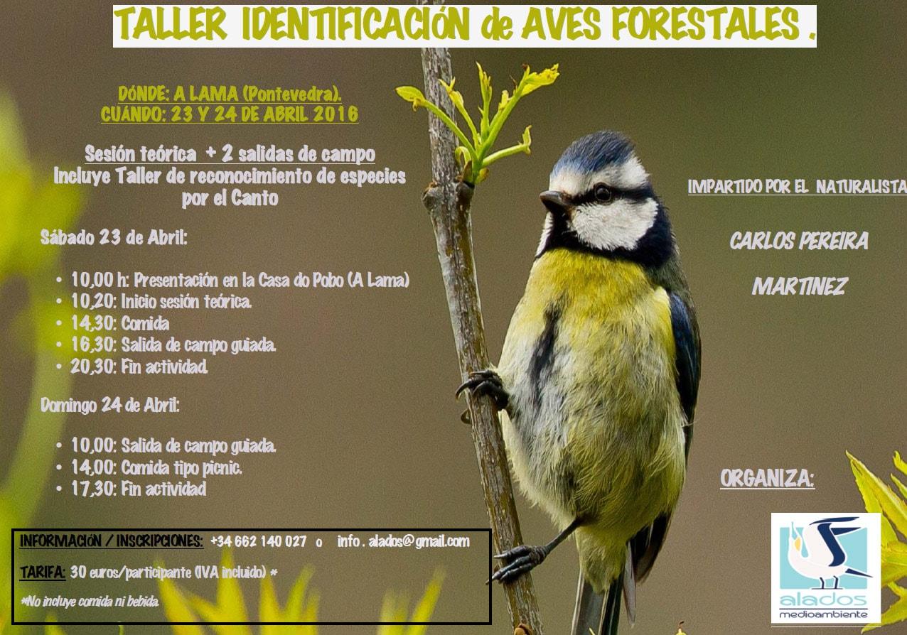 Taller identificación de aves forestais