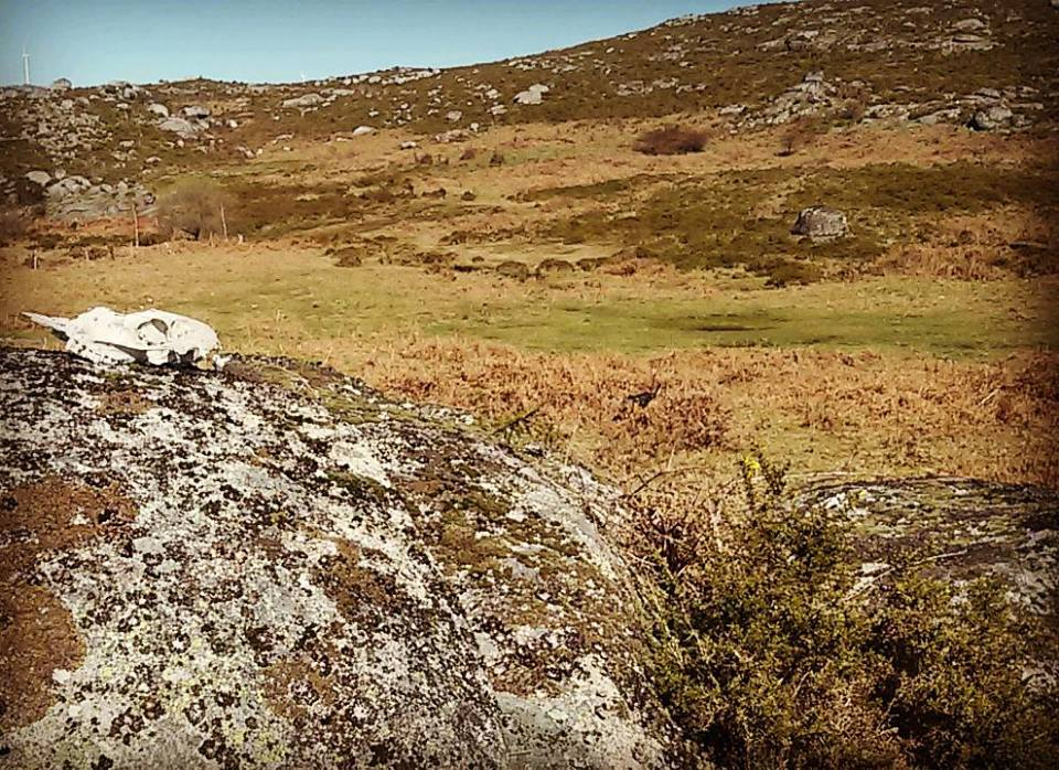 Ruta guiada en la serra do Suído con Alecrín