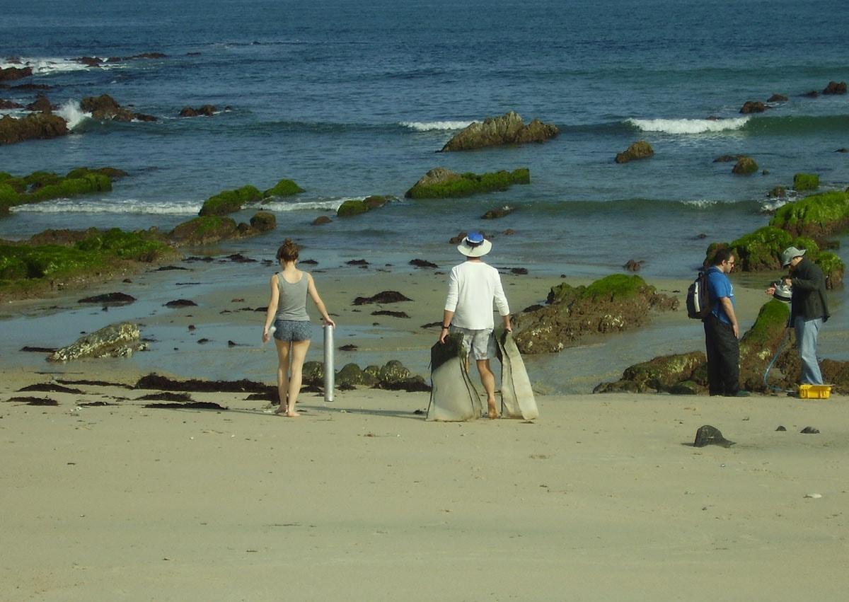 Conservar a biodiversidade das praias estuáricas depende das algas