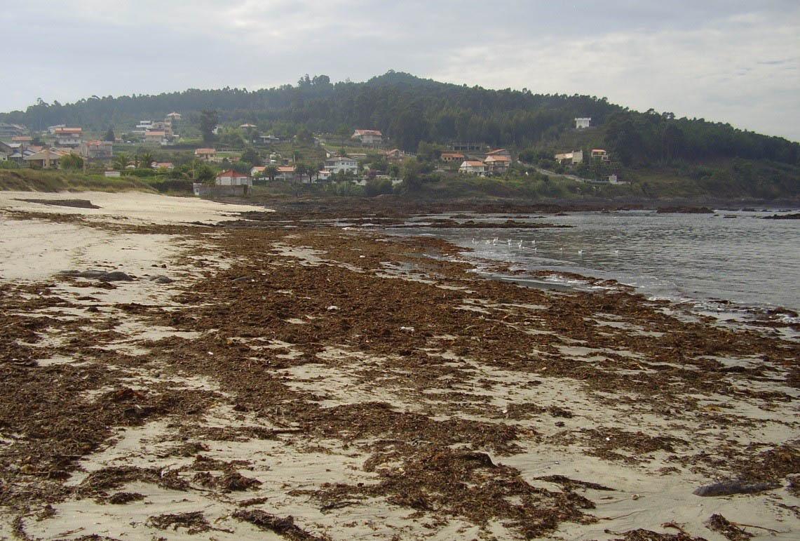 A Asociación de Guías Acreditados das Illas Atlánticas (Agaias) organiza unha charla sobre a importancia das algas nos areais