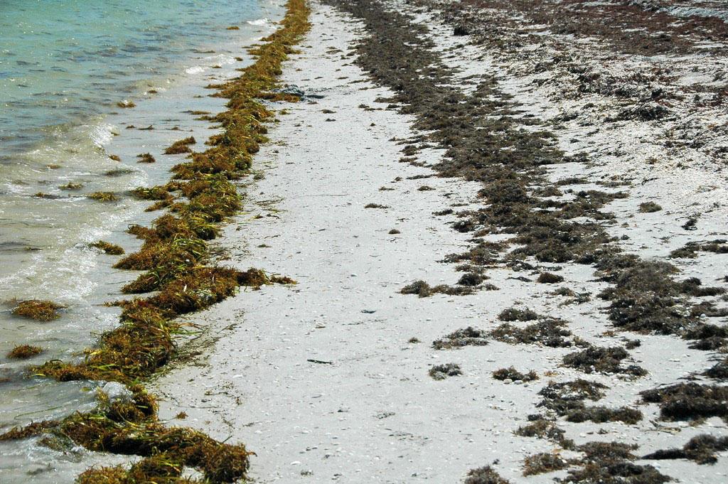 O quentamento global aumentará as emisións de CO2 nas praias areosas