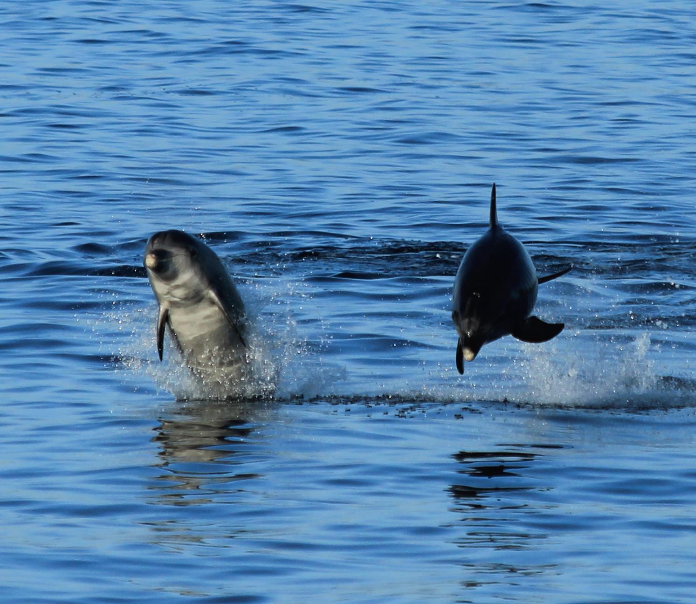 'Mar de Ciencia' ou cómo combinar lecer e turismo científico nas Illas Atlánticas