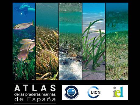 Está dispoñible o atlas das pradarías mariñas de España