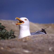 © Mar de Aves