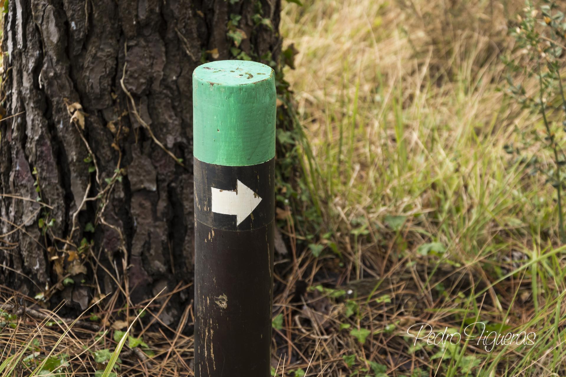 Actividades de balde. Outono no Parque Nacional