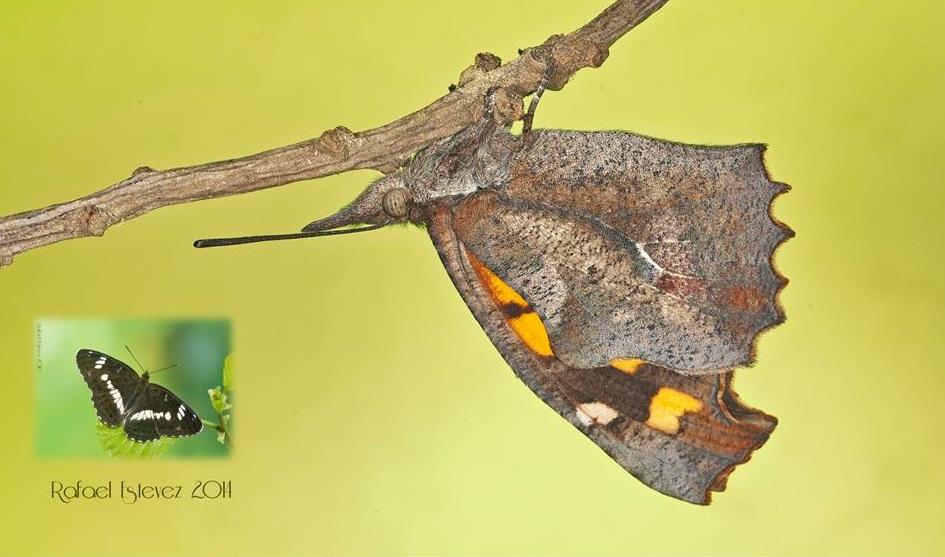 Charla proxección sobre o mundo das bolboretas no local social de Pena Trevinca