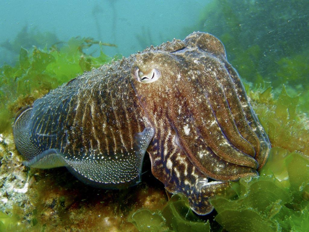 A Semana de Cine Submarino mergúllase na procura de serpes mariñas xigantes, barcos afundidos, chocos e tiburóns