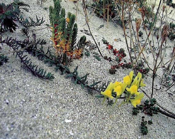 Estudio florístico de la isla de Ons