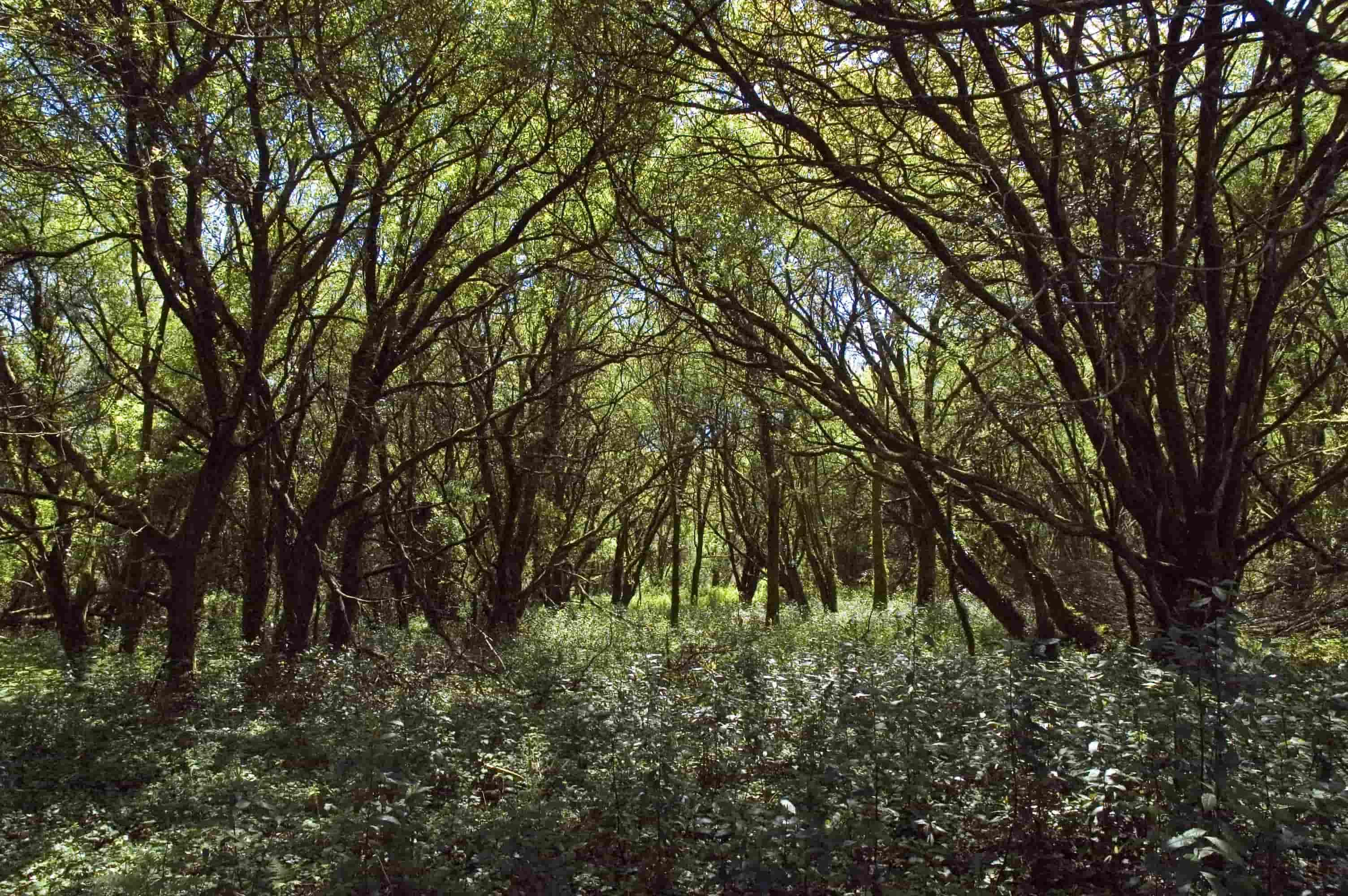 Cortegada. Un bosque con aldea ou unha aldea con bosque, que foi o primeiro?