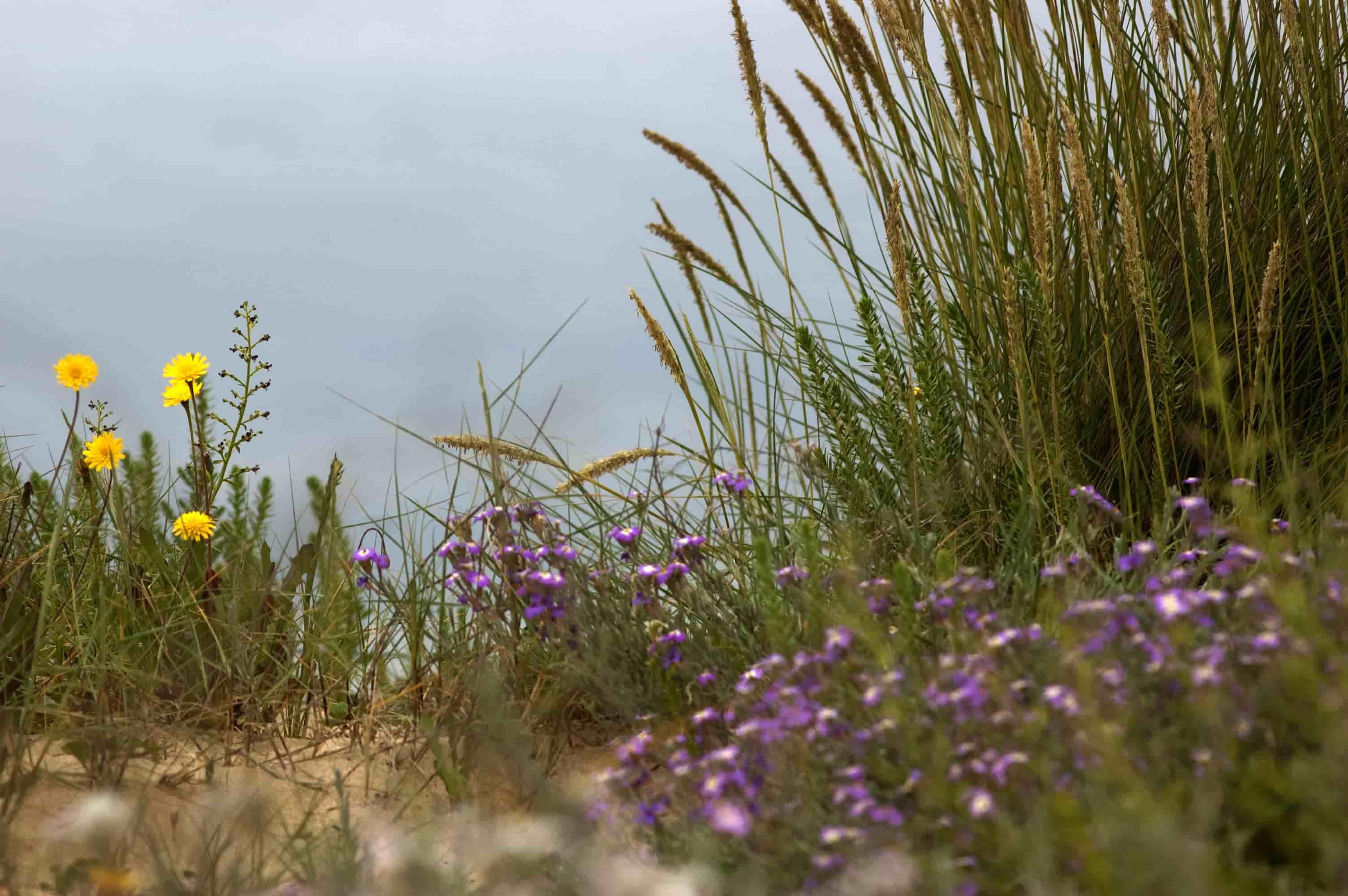 A colaboración como instrumento para crear microrreservas litorais de flora