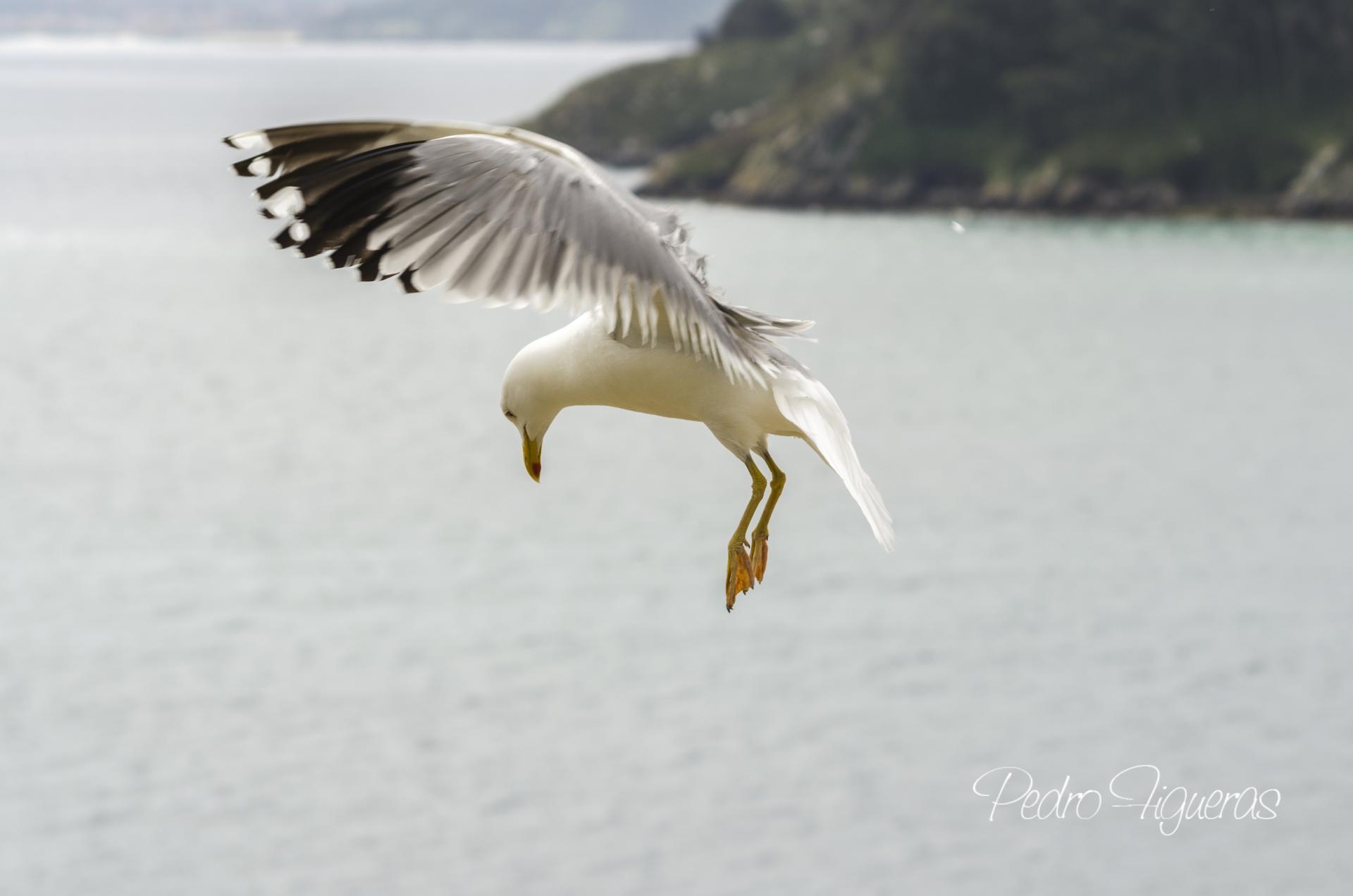 Os excrementos de aves mariñas redistribúen grandes cantidades de nitróxeno e fósforo