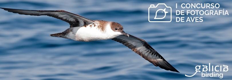 1º Concurso de fotografía de aves Galicia Birding