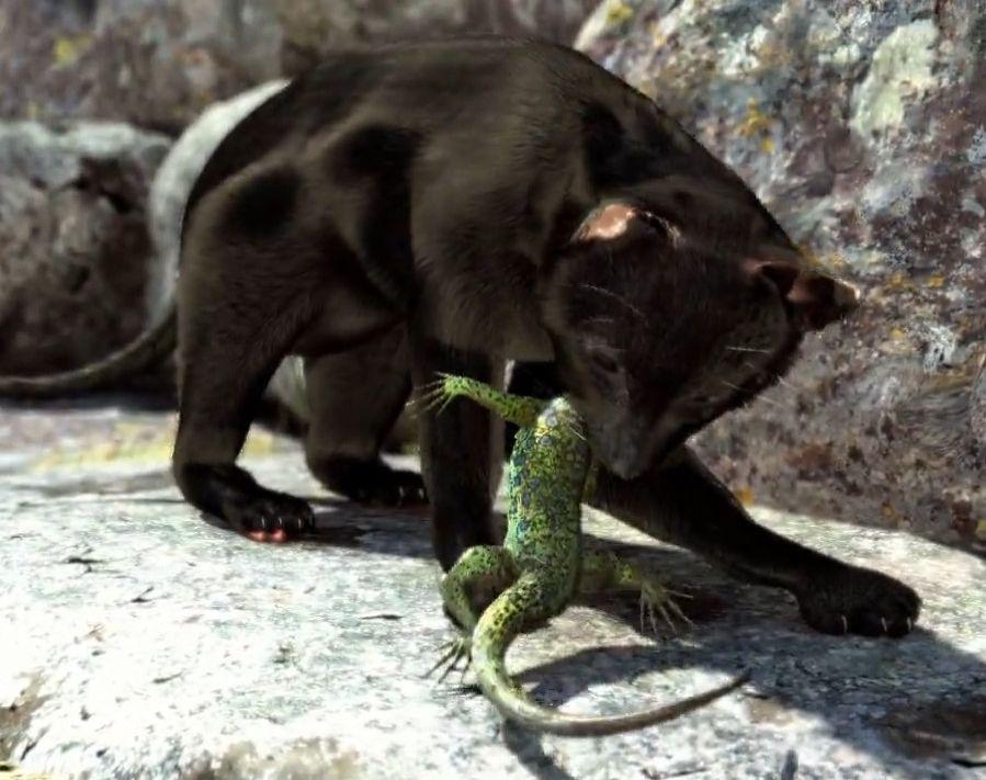 O perigo das mascotas nas illas interpretado por Divulagre