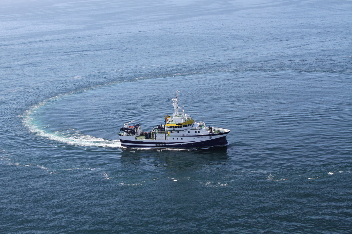 O IEO participa nunha campaña internacional a gran escala para estimar a abundancia de cetáceos en augas do Atlántico europeo