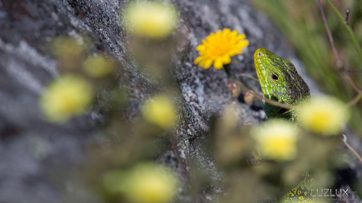 Fotowalks. Descubre os tesouros do Parque Nacional e lévaos a casa…