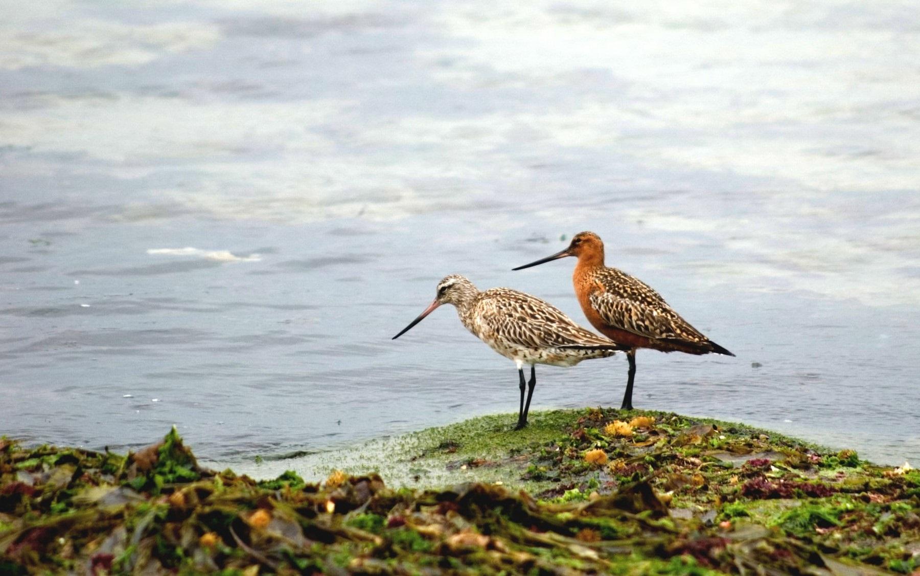 V Xornadas Ornitolóxicas: a conservación das aves galegas e os seus hábitats